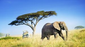 Amazing Places for Your Wild Vacation in Tanzania