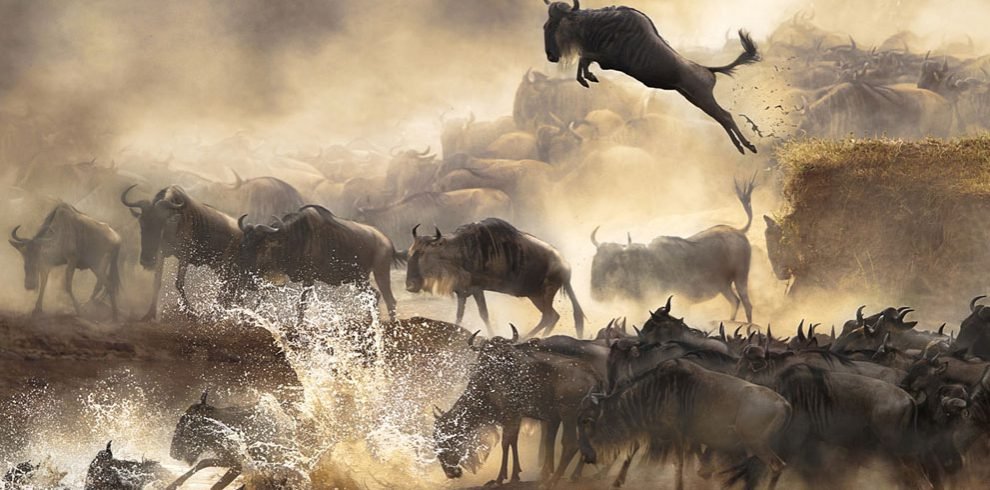 Guide on choosing a wildebeest migration between the Masai Mara and the Serengeti