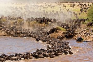 Experience Migration Crossing the Grumeti River