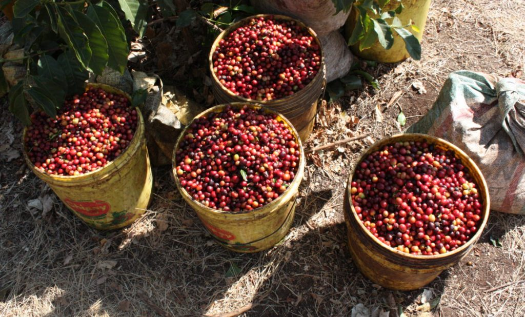 Arusha Coffee Plantation Tour