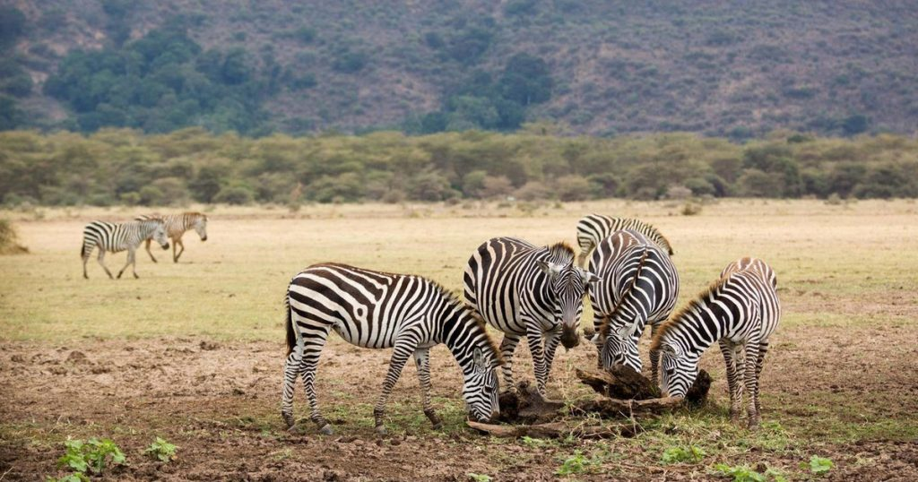Day Trip to Lake Manyara National Park