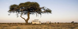 Fly to the Serengeti with Flightlink