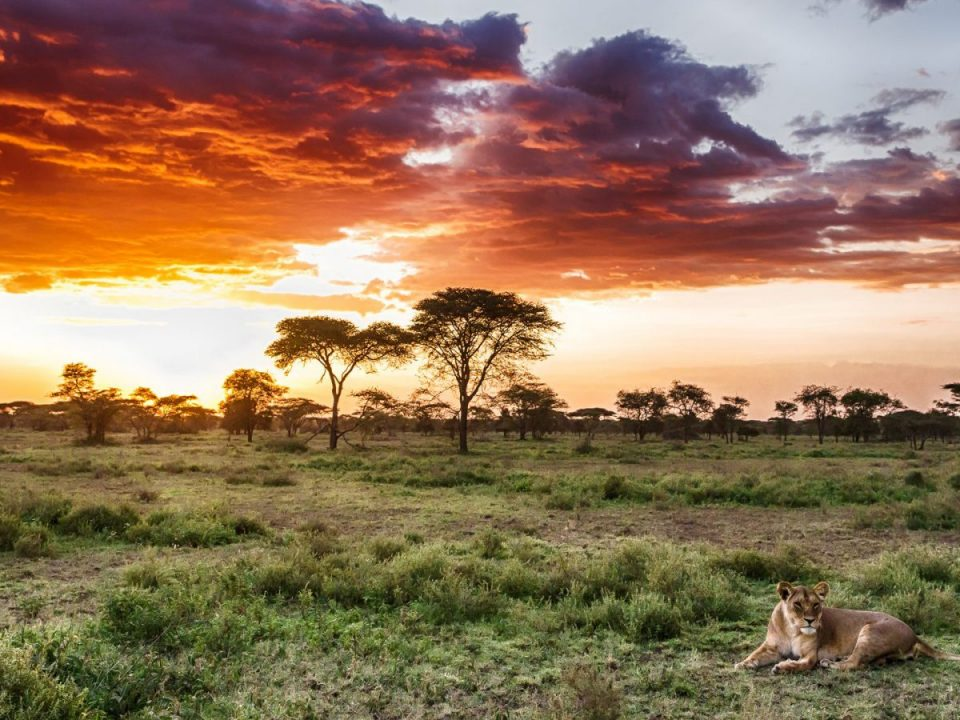 Ultimate Guide to Fort Ikoma in Serengeti National Park
