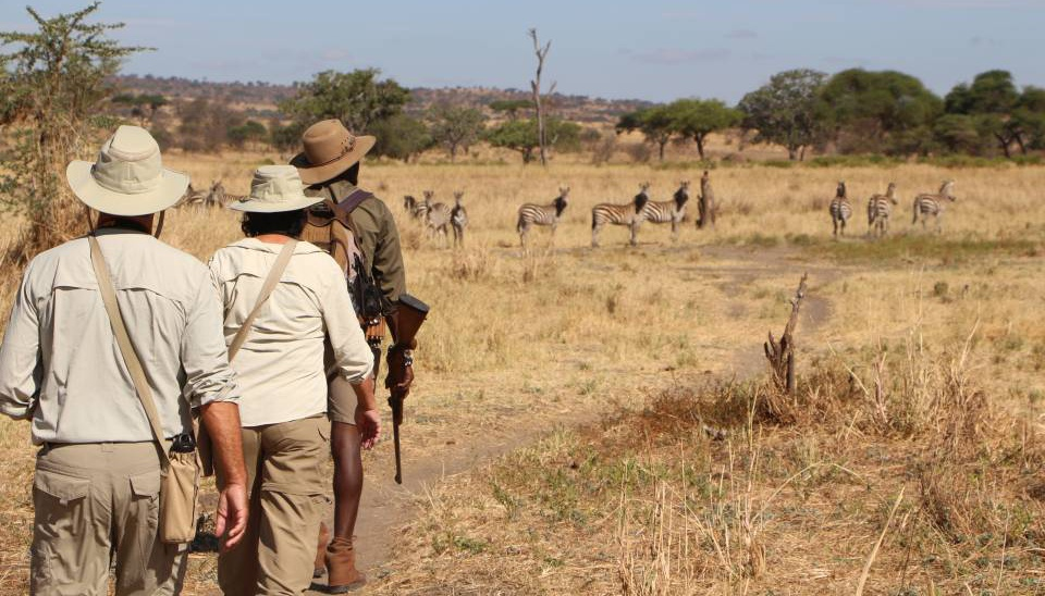 Walking Safaris in Lake Manyara National Park