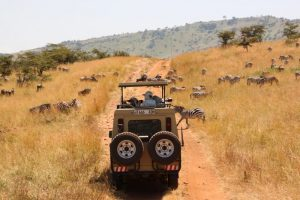 10 Exciting Things to Do Alone in Tanzania