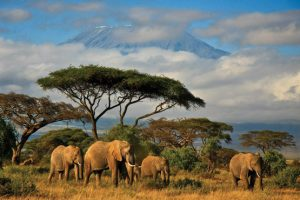 An Ultimate Tanzanian Itinerary For 10 Days by Flightlink